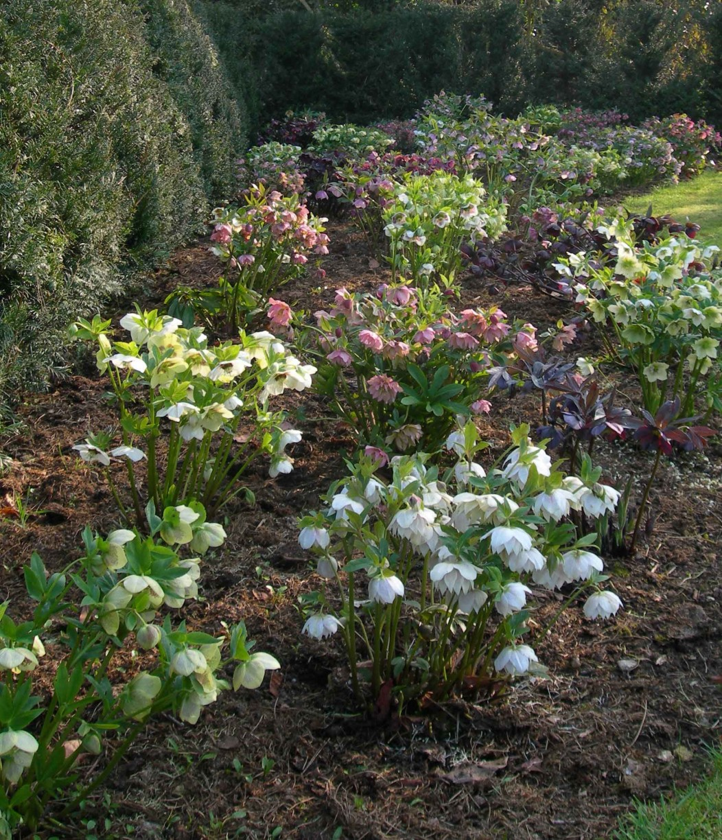 February And March In The Garden Yorkshire Gardeners
